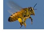 Umweltschutz - Hilfe für Bienen